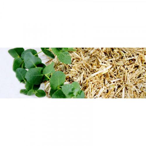 Bliss Eucalyptus - Green